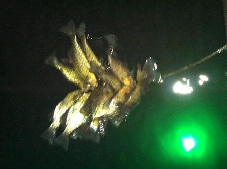Hydro glow hg3108 underwater fishing light fish light for Underwater led fishing lights